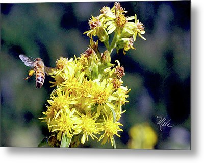 Bee On Goldenrod Metal Print by Meta Gatschenberger