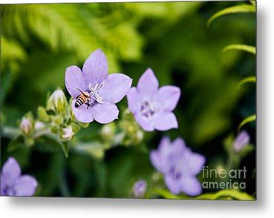Bee On Lavender Flower Metal Print