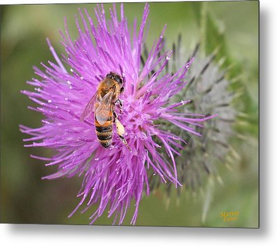 Bee On Purple Thistle Metal Print