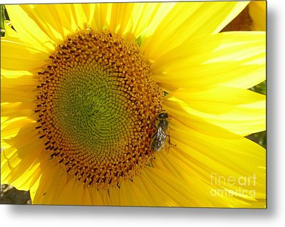 Metal Print featuring the photograph Bee On Sunflower by Jean Bernard Roussilhe