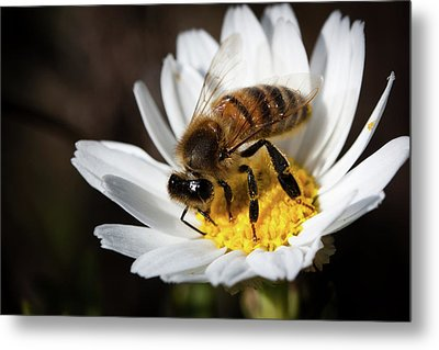 Bee On The Flower Metal Print by Bruno Spagnolo