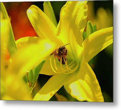 Bee On Yellow Lilly Metal Print