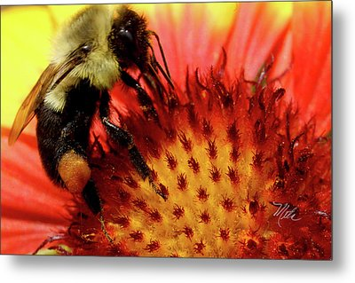 Bee Red Flower Metal Print by Meta Gatschenberger