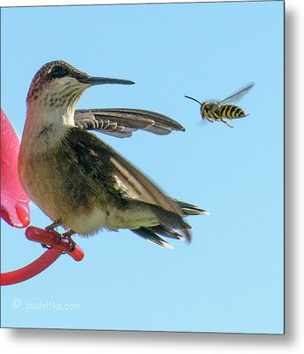 Bee_bird Metal Print
