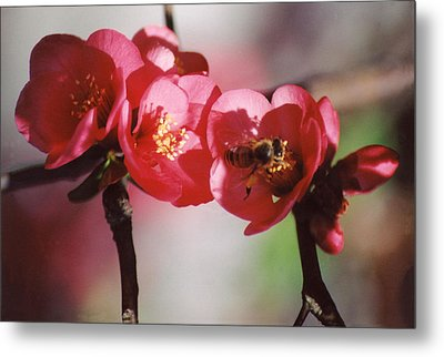 Beeing Pretty Busy Metal Print by Jan Amiss Photography