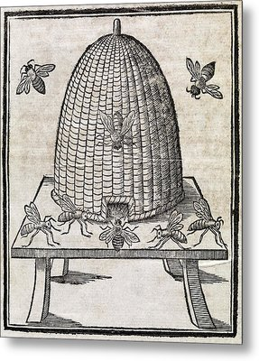 Bees And Beehive, 17th Century Artwork Metal Print by Middle Temple Library
