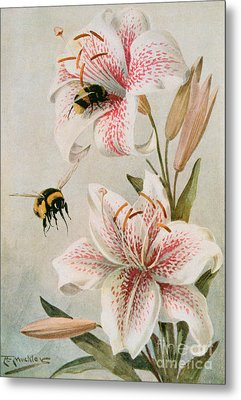 Bees And Lilies Metal Print