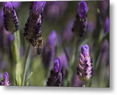 Bee's Delight Metal Print by Laura Pratt