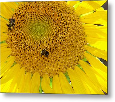 Metal Print featuring the photograph Bees Share A Sunflower by Sandi OReilly