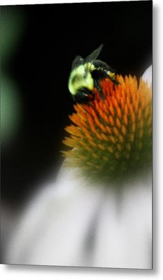 Metal Print featuring the photograph Beeutiful  by Laura DAddona