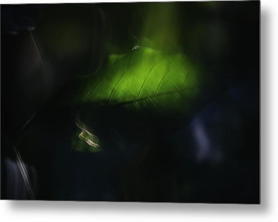 Before Darkness Falls Metal Print by Martin Morehead