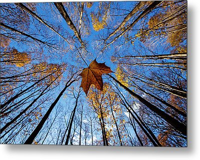 Before The First Snow Metal Print