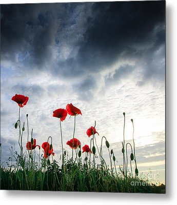 Metal Print featuring the photograph Before The Storm by Franziskus Pfleghart