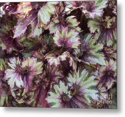 Begonia Raspberry Swirl Metal Print by Tim Gainey