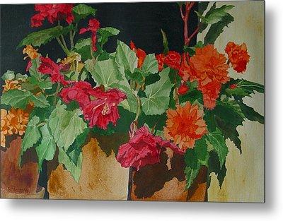 Begonias Flowers Colorful Original Painting Metal Print