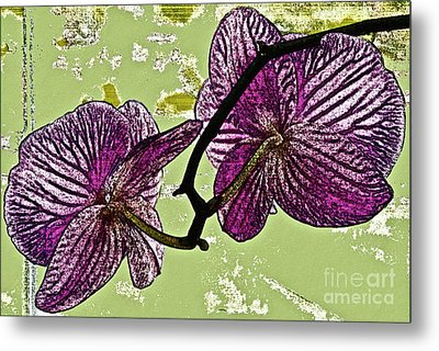 Behind The Orchids Metal Print by Gwyn Newcombe