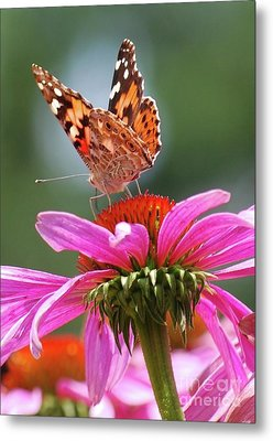 Metal Print featuring the photograph Behind The Painted Lady by Lila Fisher-Wenzel