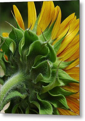 Metal Print featuring the photograph Behind The Sun-flower by Lori Mellen-Pagliaro