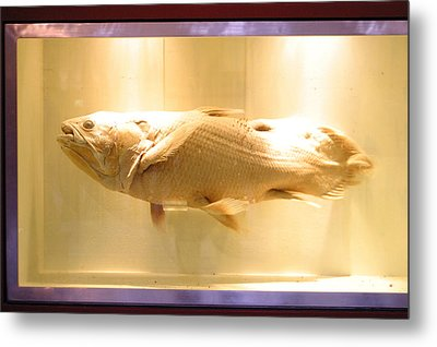 Beige Fish Metal Print by Jez C Self