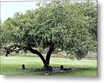 Belize Tree Metal Print