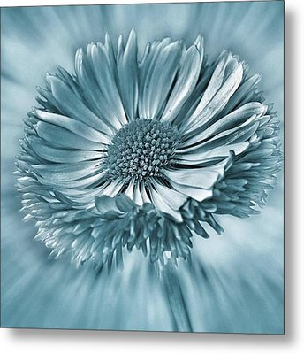 Bellis In Cyan  #flower #flowers Metal Print by John Edwards