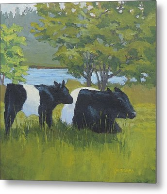 Belted Galloway And Calf Metal Print