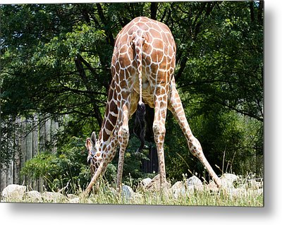 Bend And Stretch  Metal Print by A New Focus Photography