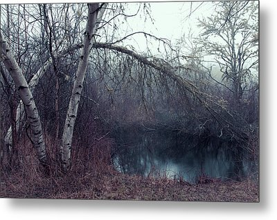 Metal Print featuring the photograph Bending Birch by Andrew Pacheco