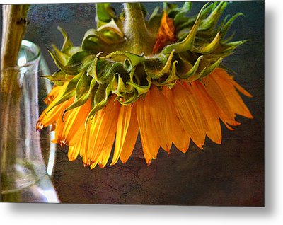 Metal Print featuring the photograph Bending  Sunflower by John Rivera