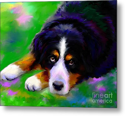 Bernese Mountain Dog Portrait Print Metal Print