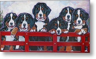 Bernese Mountain Dog Puppies Metal Print by Nadi Spencer