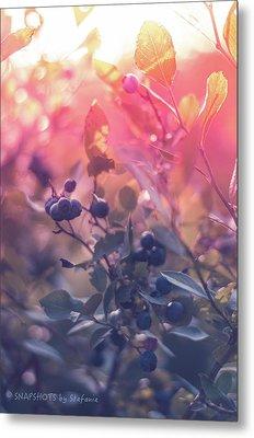 Berries In The Sun Metal Print