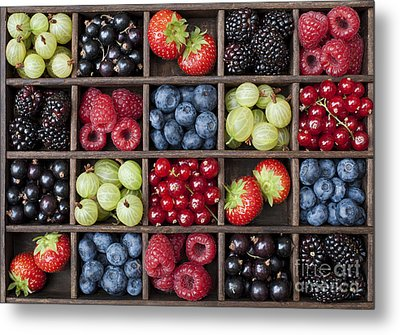 Berry Harvest Metal Print by Tim Gainey