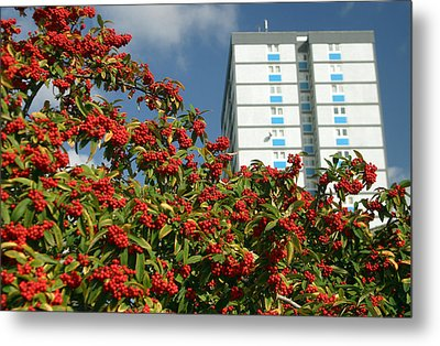 Berry The Future Metal Print by Jez C Self