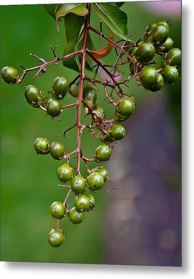 Berry Truly Yours  Metal Print by Michael Putnam