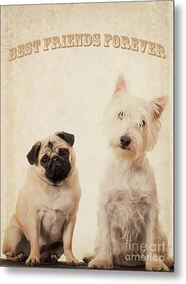 Best Friends Forever Metal Print by Edward Fielding