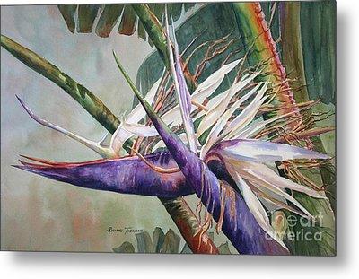 Betty's Bird - Bird Of Paradise Metal Print by Roxanne Tobaison