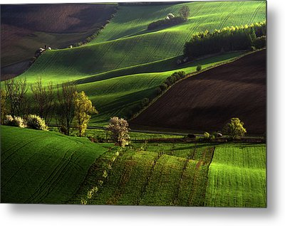 Metal Print featuring the photograph Between Green Waves by Jenny Rainbow