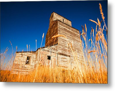 Between The Blades Of Grass Metal Print