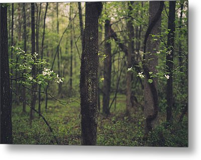 Metal Print featuring the photograph Between The Dogwoods by Shane Holsclaw