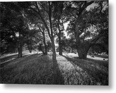 Between The Oaks Metal Print