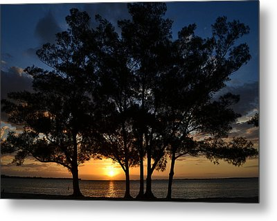 Metal Print featuring the photograph Between The Trees by Melanie Moraga