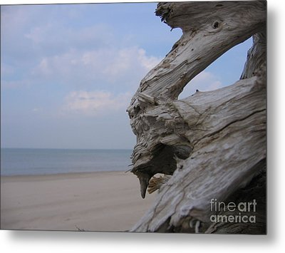 Metal Print featuring the photograph Driftwood by Maciek Froncisz