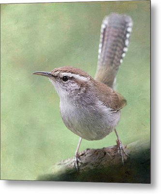 Metal Print featuring the photograph Bewick's Wren by Angie Vogel