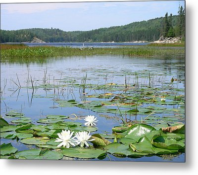 Beyond The Lilly Pads Metal Print by Peter  McIntosh