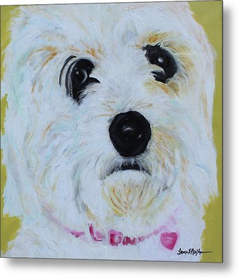 Metal Print featuring the painting Bichon Frise-king Charles Cavalier Spaniel Mix - Molly by Laura  Grisham