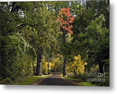 Bidwell Park By One Mile Metal Print