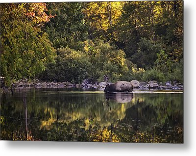 Big Bull In Buffalo National River Fall Color Metal Print by Michael Dougherty
