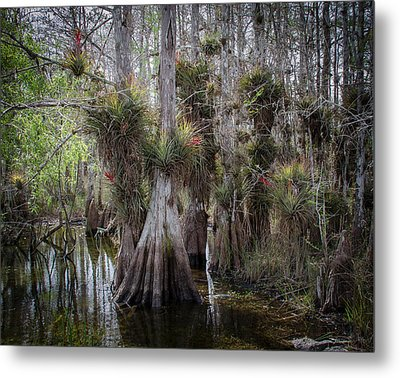 Big Cypress Preserve Metal Print by Bill Martin