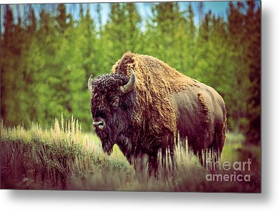 Big Daddy Metal Print by Robert Bales